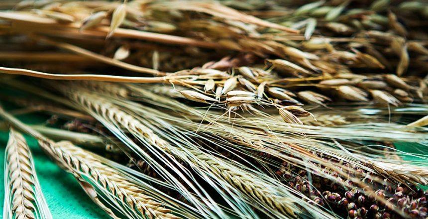 Angebot Getreideanbau