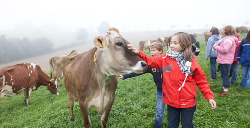 Angebot Mit der Kuh auf Du